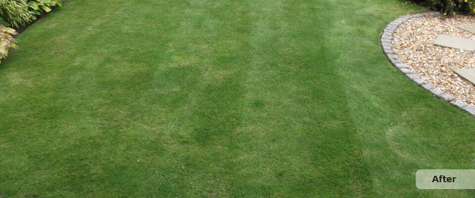 Lawn Treatment After