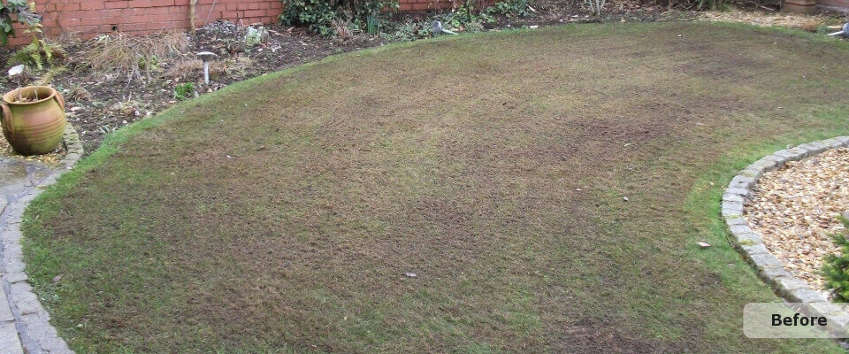 Lawn Treatment Before
