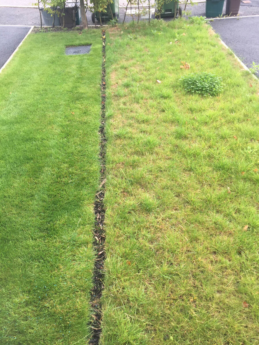 The lawn on the left has been treated by Emerald Lawn Care while the lawn on the right hasn't been treated