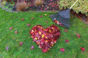 Autumn treatments
